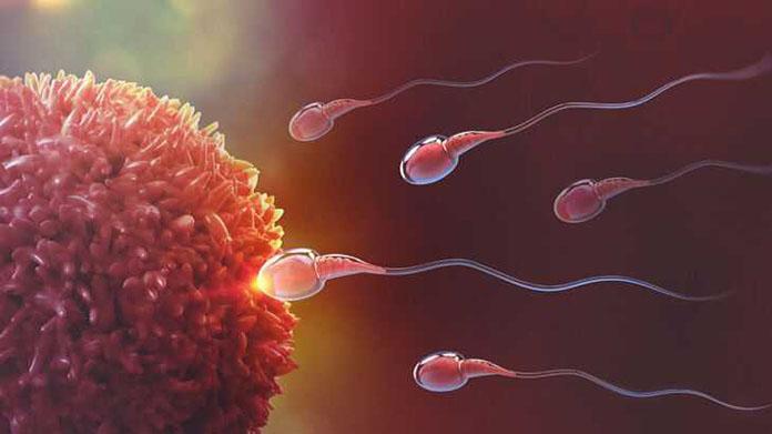 sperm sayısı kaç olmalı