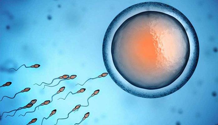 sperm donasyonu aşamaları